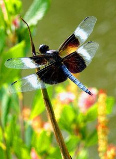 Dragonfly! This site has lots of interesting ideas on recycling in the garden. Some of them I even like! :)