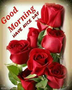 Latest Good Morning Images, Good Morning Images Download, Good Morning Picture, Good Night Image, Good Morning Greetings, Good Morning Good Night, Morning Pictures, Morning Pics, Morning Msg