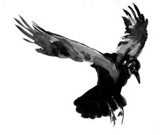 Crow Drawings | As Shown: $54.49