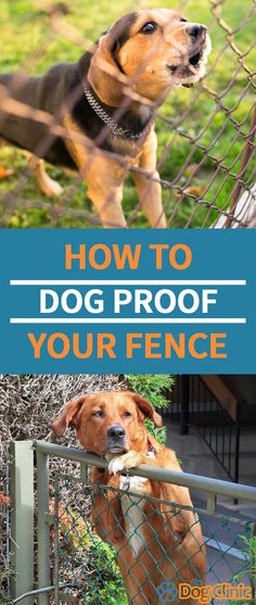 Dog jumping fence - A dog proof fence is essential for keeping your pet safe and secure Here are tips for preventing digging, jumping and climbing dogs dogfence doggear canine puppy dog Dog Proof Fence, Dog Fence, Dog Jumping Fence, Stop Dogs From Digging, Short Dog Quotes, Dog Playpen, Dog Safety, Pet Safe, Dog Hacks