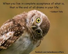 When you live in complete acceptance of what is, that is the end of all drama in your life Eckhart Tolle. Life Quotes Love, Great Quotes, Inspirational Quotes, Motivational Quotes, Uplifting Quotes, Owl Quotes, Wisdom Quotes, Rumi Quotes, Gratitude Quotes