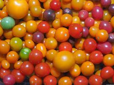 Sow these tomato seeds now to grow the tastiest tomatoes this summer! - Pumpkin Beth Container Plants, Container Gardening, Gardening Tips, Growing Vegetables, Growing Plants, Tomato Seeds, Colorful Garden, Edible Garden, Types Of Food