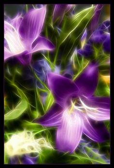 purple lillies - Google Search