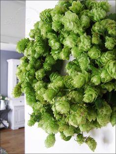 Bizzy @ Home: Hop krans - Oasekrans, nat maken en met krammetjes ijzerdraad extra verstevigen. - Hops Vine Wreath