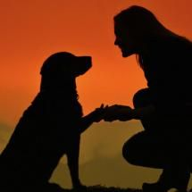 Silhouette of Dog & Owner. Precious. ❤