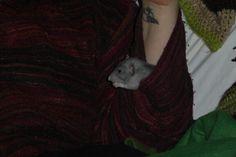 Ash the sleeve rat. 7 weeks old