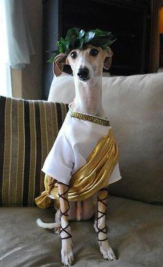 Julius Caesar pooch