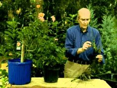 ▶ Jerry Baker's Year Round Rose Care Spring Buying Roses - YouTube