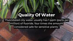 Make Stunning Mason Jar Solar Lights - Pachira Aquatica, Chlorophytum, Powdery Mildew, Inside Plants, Tree Care, Garden Edging, Tomato Plants, Potting Soil, Plant Care