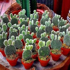 Everyone here wishing you a great Saturday! from @ The market in cactus house plants is booming and with very good reason. Mini Cactus Garden, Cactus House Plants, Cactus Pot, Cactus Flower, Flower Pots, Types Of Succulents, Cacti And Succulents, Planting Succulents, Planting Flowers
