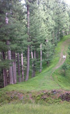 BARA GALI is one of the mountain resort towns of the Galyat and Ayubia National Park, at an altitude of 2,350 metres. It is located in the Abbottabad District of Khyber Pakhtunkhwa province in northern Pakistan.