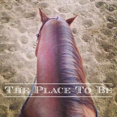The Place To Be #horses