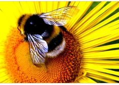 I love bumble bees