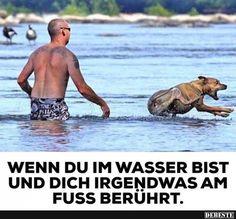 Wenn du im Wasser bist und dich irgendwas am Fuss.. | Lustige Bilder, Sprüche, Witze, echt lustig