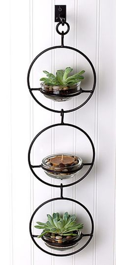 This simple and subtle hanging terrarium will add color and style to any wall and can be used indoors and outdoors and is sure to make an incredible statement. The black iron sphere holds a heavy glas