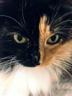 #Cats  #Cat  #Kittens  #Kitten  #Kitty  #Pets  #Pet  #Meow  #Moe  #CuteCats  #CuteCat #CuteKittens #CuteKitten #MeowMoe      Jingles ...   http://www.meowmoe.com/90108/