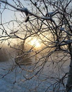 Tired of cold and snow? These poems capture the raw beauty of winter and the hidden promise of spring.
