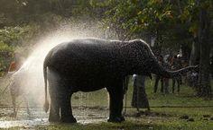 Elefante é banhado no último dia do festival religioso Nawam poya Perahera na capital do Sri Lanka.