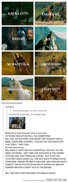 Bill the Pony for President of Middle Earth! xD