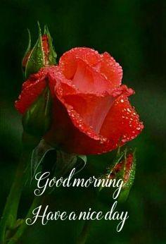 Good Morning Rain, Good Morning Massage, Good Morning Coffee Gif, Good Morning Beautiful Flowers, Good Morning Roses, Good Morning Images Flowers, Good Morning Cards, Good Morning Greetings, Morning Wish