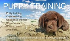 The Labrador Puppy Training Center. Your guide to training a happy, obedient puppy. Expert advice and clear instructions for new Lab puppy parents. Let's go! #puppytrainingeasy #onlinedogtraining #dogtrainingnearme