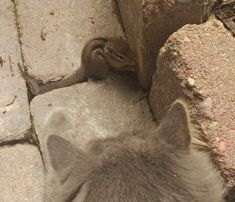 """A little chipmunk decided to adventure into a yard but only to meet a furry feline whose tail was three times the size of the little one. """"My cat made friends with a chipmunk,"""" reddit user _GoldGuy_ said.This is the moment they met...Photo: _GoldGuy_Photo: _GoldGuy_The kitty lies down on the ground ..."""