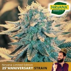 California is world famous for their orange juice, and this strain certainly showcases that. An easy to grow hybrid that is an even bled of indica and sativa genetics. Order now. Cannabis Seeds For Sale, Green Business, Lineage, Orange Juice, Genetics, Bud, South Africa, California, School