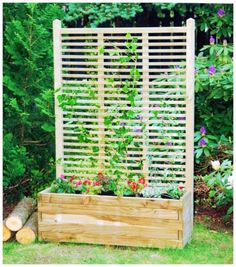 Oslo Pflanzkasten mit Rankgitter There are various points that may ultimately total your back garden, Vertical Gardens, Back Gardens, Small Gardens, Wooden Trellis, Wooden Garden Planters, Garden Screening, Plant Box, Balcony Plants, Balcony Garden