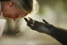 Inside a Nat Geo Photographer's 'Wild' Career