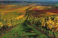 Rhein valley, germany