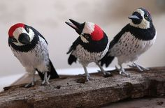 Aimee Baldwin creates stunningly lifelike birds such as these acorn woodpeckers, 2009--crepe paper, wire, acrylic paint, glass eyes--
