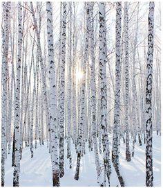 """ilusmaailm: """"Talv on ilus, tunnistage seda """""""