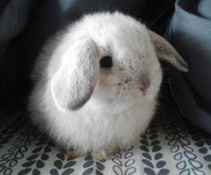 Bunny | via Tumblr
