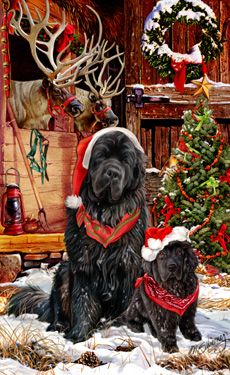 """New for 2014! Newfoundland Christmas cards are 8 1/2"""" x 5 1/2"""" and come in packages of 12 cards. One design per package. All designs include envelopes, your personal message, and choice of greeting.Select the inside greeting of your choice from the menu below.Add your personal message to the Comments box during checkout."""