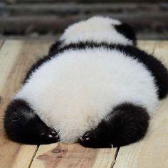 cute Panda for sale Cute Little Animals, Cute Funny Animals, Cute Dogs, Cute Babies, Panda Love, Love Bear, Cute Panda, Fluffy Animals, Animals And Pets