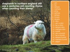 Here's another #DidEweKnow fact! Careful practising this though, ewe might fall asleep! :D #herdy #herdwick #sheep #lakedistrict #factoftheday