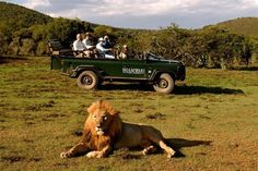 Shamwari Game Reserve, Paterson, South Africa | HipTraveler