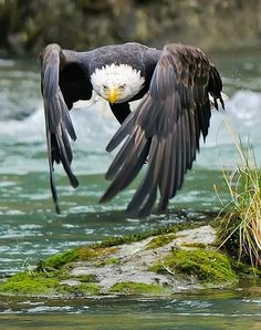 caught in action:  eagle in flight