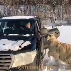 - Tiere Hey buddy, can I get a lift? - Tiere - Hey buddy, can I get a lift? - Tiere - Cats and Kittens Pics Cute Little Animals, Cute Funny Animals, Cute Dogs, Funny Cats, Cute Animal Videos, Funny Animal Pictures, Beautiful Cats, Animals Beautiful, Super Cat