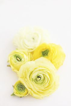 Y IS FOR YELLOW by LoveMissB, via Flickr