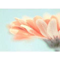 Pastel Flower Decor Bright Sumer Home Decor Fine Art Flower... (90 PLN) ❤ liked on Polyvore featuring home, home decor, wall art, backgrounds, flowers, pictures, photos, images, filler and spring home decor