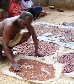 Sorting coffee beans, Zanzibar