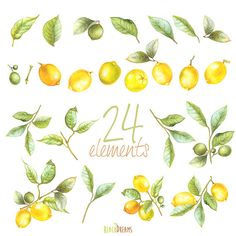 Lemon Watercolor Clipart. Hand painting fruit Lime by ReachDreams