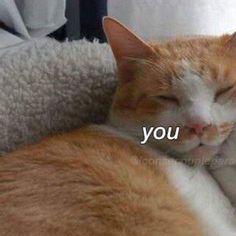 from the story ꒷ೈ̸๊̯֥͋֕֡֞⃟ 🍥꧇ matching icons by -frxnchbOi (⠀⠀⠀⠀⠀⠀⠀⠀⠀⠀𖤐) with reads. Friends Wallpaper, Sad Wallpaper, Cartoon Memes, Cat Memes, N Animals, Cute Animals, Kittens Cutest, Cute Cats, Best Friend Couples
