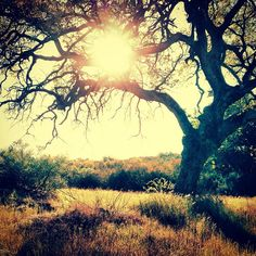 """I want to hike the """"Lord of the Rings Trail"""" on the Santa Rosa Plateau. It branches off of the Vernal Pools and joins the Old Ranch Road."""