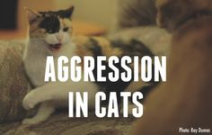 Dr.Jean slider Aggression In Cats