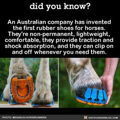 An Australian company has invented the first rubber shoes for horses. They're non-permanent, lightweight, comfortable, they provide traction and shock absorption, and they can clip on and off whenever you need them. Source