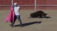 "In a small town in Spain, baby bulls are thrown into the arena to fight off grown men with swords. These babies do not even have fully grown horns to defend themselves. Sign this petition and demand a stop to this barbaric ""sport."""