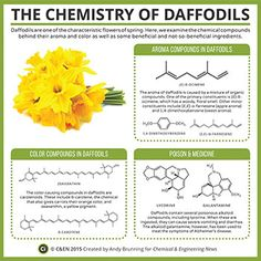 Periodic Graphics: The Chemistry Of Daffodils http://cen.acs.org/content/dam/cen/static/pdfs/Article_Assets/93/09315-scitech2.pdf