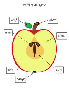 This is a mega bundle of several different printables and consists of 55 pages of educational activities with real images. Your child will have great fun while learning everything about an apple with exercises in maths, language, coordination, logic and botany.  This printable includes:   Apple counting cards (1 – 10)  Number cards (1 – 10)  Apple counting cards with numbers (1 – 10)  Apple counting chart  Apple counting clip cards  Apple mazes  Prewriting practice  Cutting practice  Small…